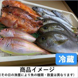 目利きの鮮魚BOX(お買得版)3kg前後