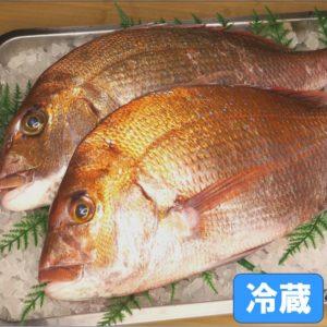 玄界灘産 活〆天然真鯛 中サイズ 2尾(1尾2kg前後)